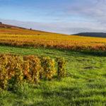 La carte des vins se redessine peu à peu