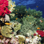 Outre-mer : PPRN, relocalisations… les élus des Outre-mer se mobilisent