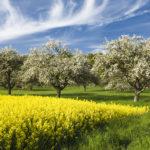 L'agriculture doit réviser ses fondamentaux