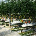 Nouvelle-Aquitaine : A Lapouyade, le biogaz fait pousser les tomates