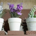 Tarbes : Vegeplast, pionnière des bioplastiques