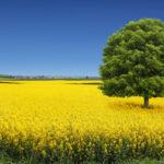 L'agriculture française bouleversée par les évolutions économiques, techniques et sociétales