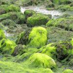 Saint-Brieuc : L'agroénergie pour lutter contre les algues vertes