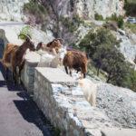 Certains territoires sont plus exposés aux risques routiers