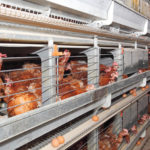 Les fermes-usines, bientôt la norme?