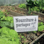 Les Incroyables Comestibles s'enracinent en Alsace