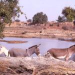 Grâce à l'agro-écologie, le Sahel reverdit