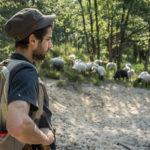 Un berger en forêt de Fontainebleau