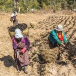 Le Bhoutan trace les sillons du bonheur