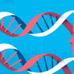 Les grands principes bioéthiques: une spécificité française