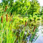 Grand Est : Uxegney expérimente la gestion alternative des eaux pluviales