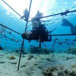 Inciter les entreprises à réparer les écosystèmes côtiers