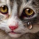 Les animaux souffrent-ils comme nous?