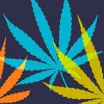 La légalisation du cannabis s'invite à l'Assemblée nationale