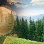 Bourgogne-Franche-Comté • Filière verte: le parc du Haut-Jura soigne son bois